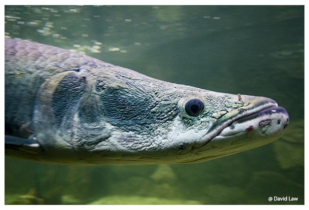Fish II copie