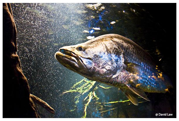 Fish copie