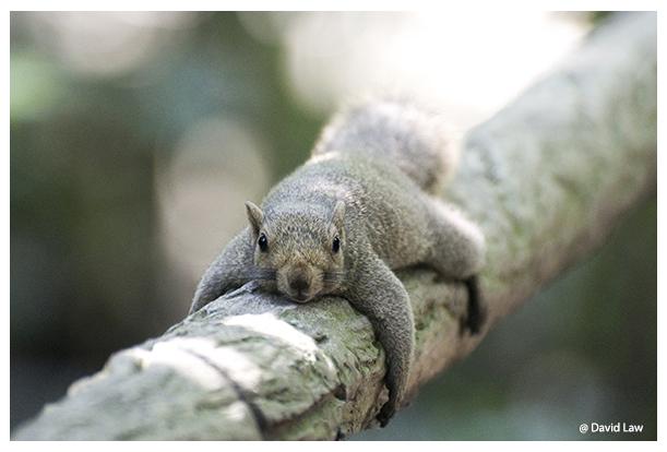 Flat Squirrel copie