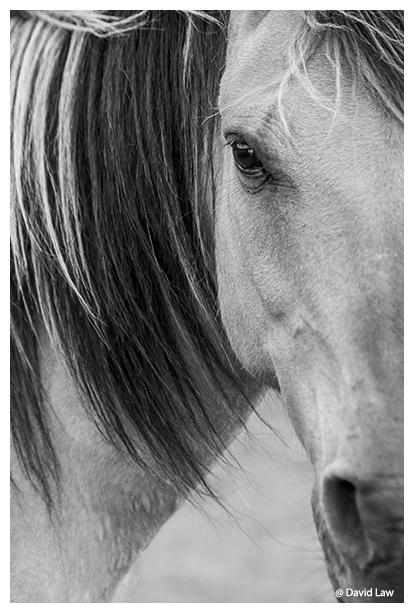 Half Horse copie