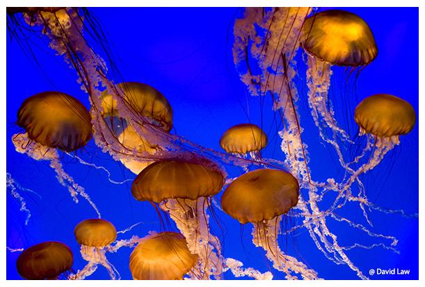 Jellyfish Ball III copie