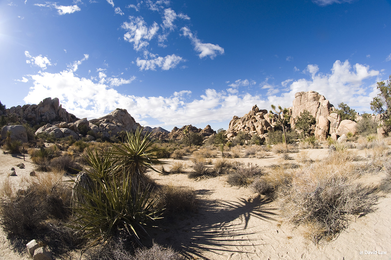 Joshua Tree Desert II