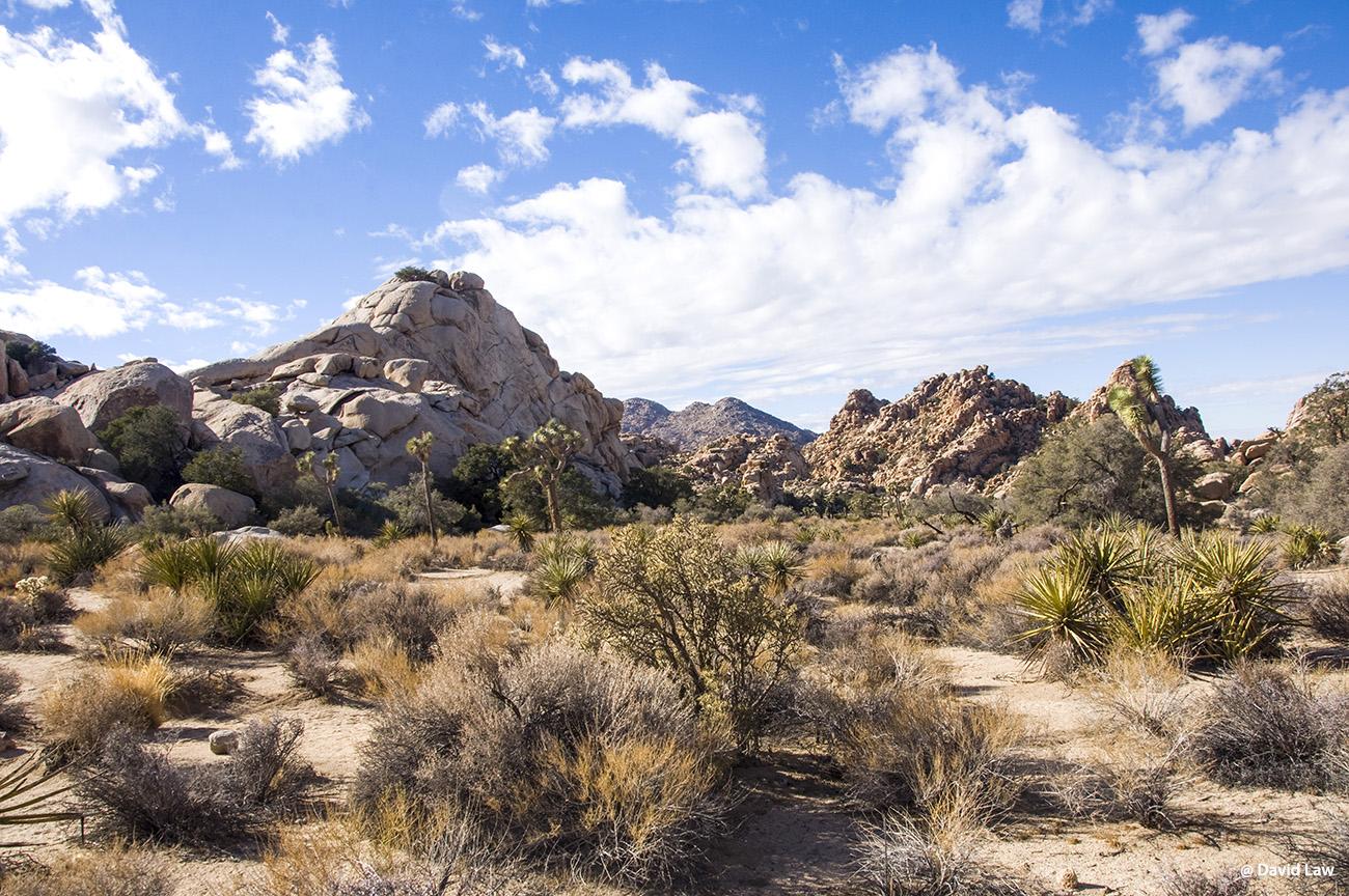 Joshua Tree Desert III