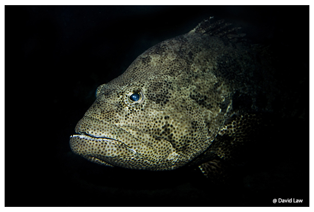 Monster Fish copie
