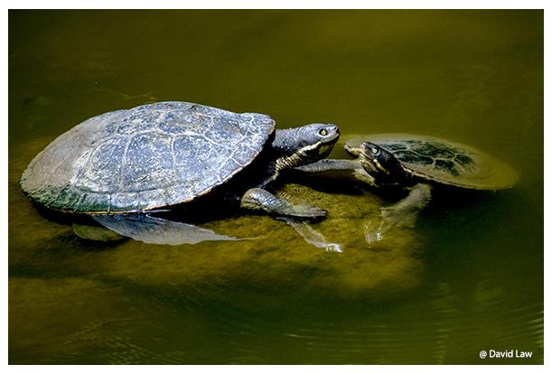 Ninja Turtles copie