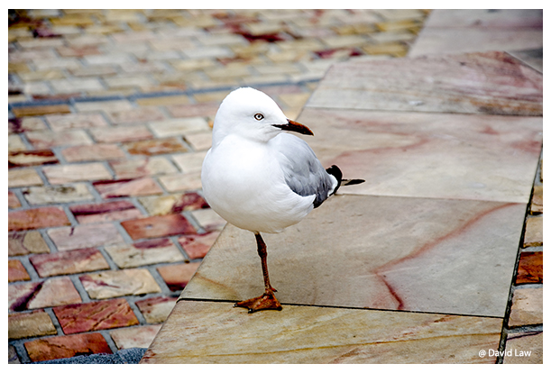 One legged Seagull copie