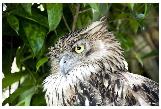 Owl II copie