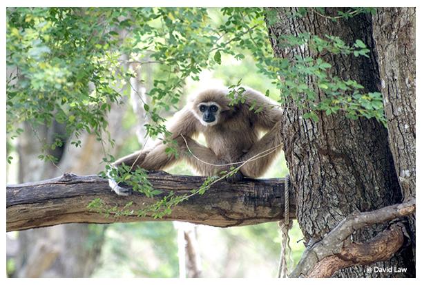 Perched Monkey copie