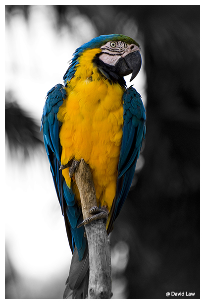 Perched Parrot copie