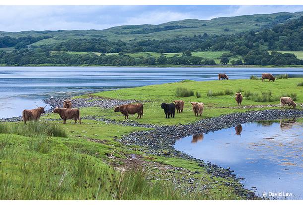 Scotland Landscape copie