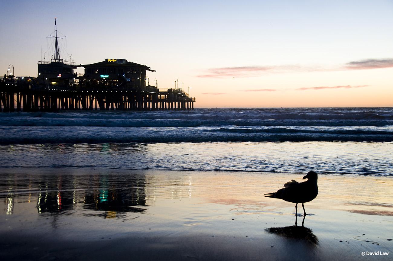 Seagals in Monterey