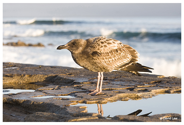 Seagull by the Sea copie