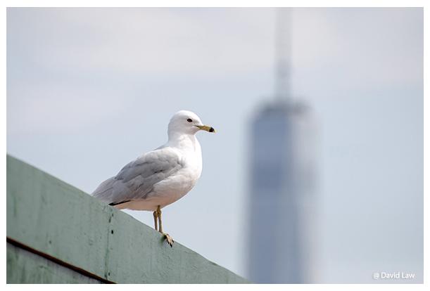 Seagull in NY copie