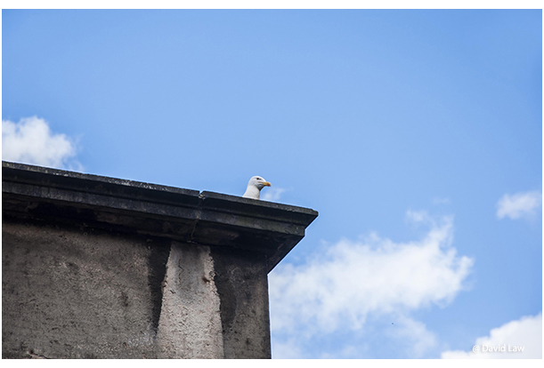 Seagull on Roof copie