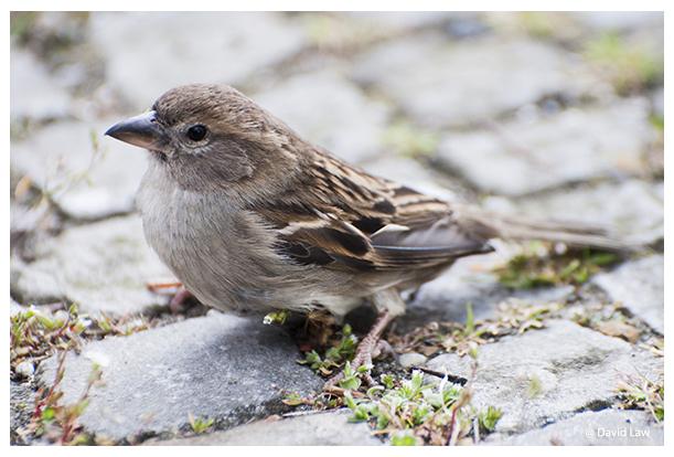 Sparrow III copie