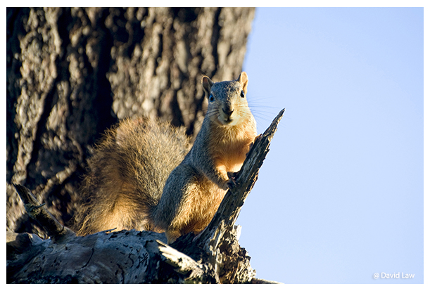 Squirrel III copie
