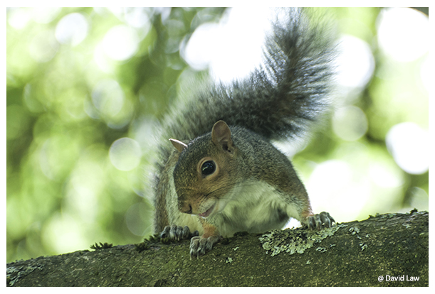 Squirrel IX copie
