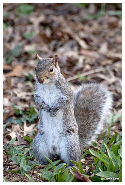 Squirrel VI copie