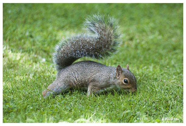 Squirrel VII copie