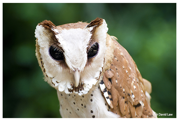 Starnge Owl copie