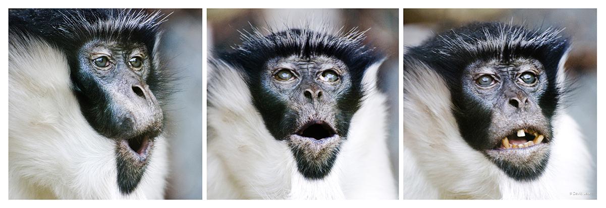 Surprises Of Chimpanzee 30x90 copie 1