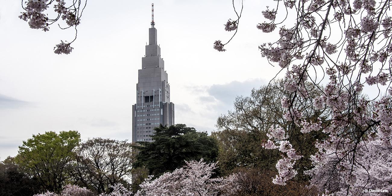 Tokyo 113 40X80