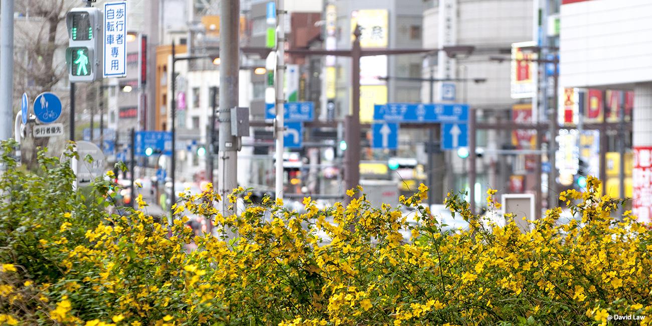 Tokyo 115 40X80
