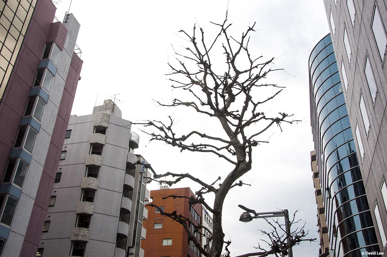 Tokyo 9 1
