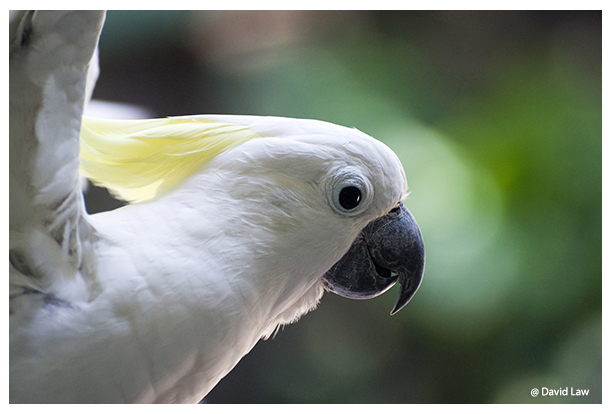 White Parrot copie