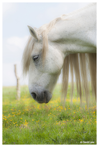 Wild Horse 3 copie