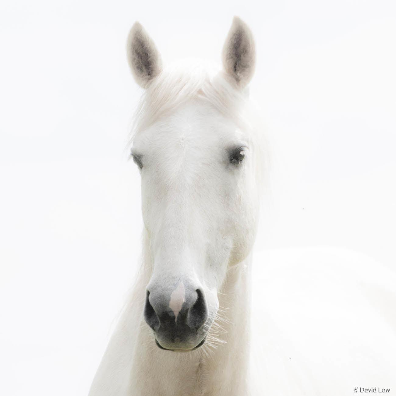 Wild Horse II Square wns s0220