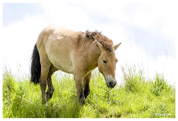 Wild Horse III copie 1