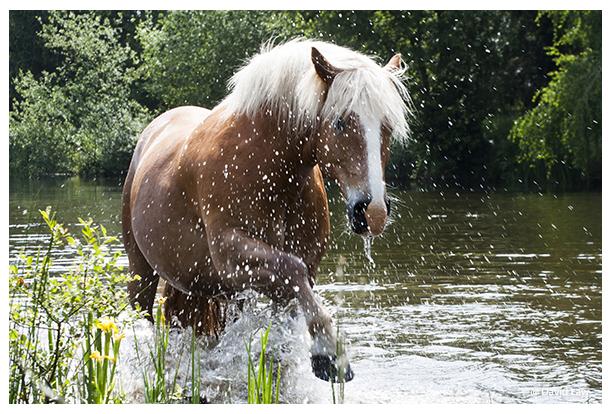 Wild Horse IV copie 1